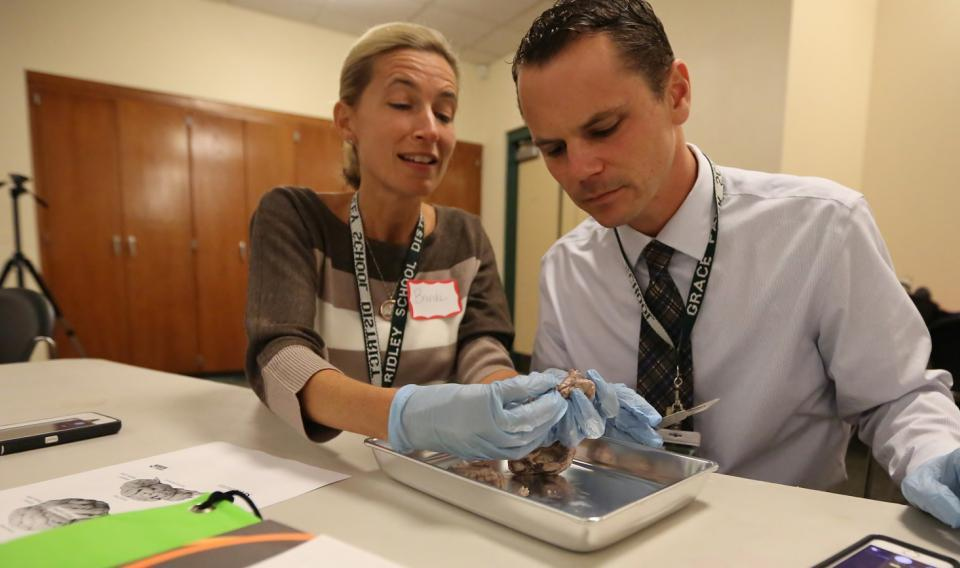two people examining dissected frog
