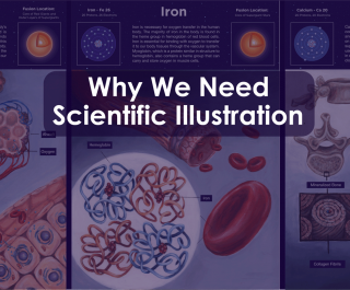 "Title image reading ""Why We Need Scientific Illustration"" layered over illustrations of the internal human anatomy"